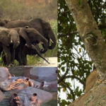 17 days wildlife expedition