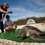 Baja sea wildlife expedition — see turtles