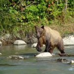 Evening wildlife expedition in skagway, alaska: a disney cruise line shore trip review – passporter.com