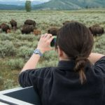 My wildlife expedition in jackson hole – jackson hole traveler