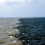 No oxygen, no existence: the gulf of mexico's 'dead zone'