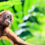 Sepilok borneo tour & wildlife expedition – backyard travel