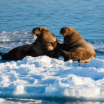 Wildlife expedition in arctic norwegian