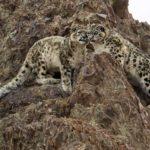 Wildlife expeditions – biganimals expeditions