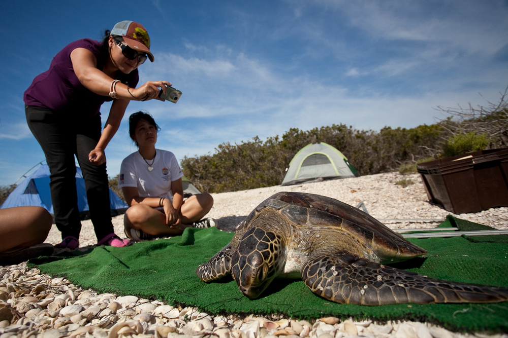 Baja sea wildlife expedition — see turtles ll take small motorboats