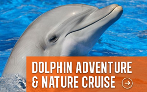 dolphin-nature-cruise-300x188