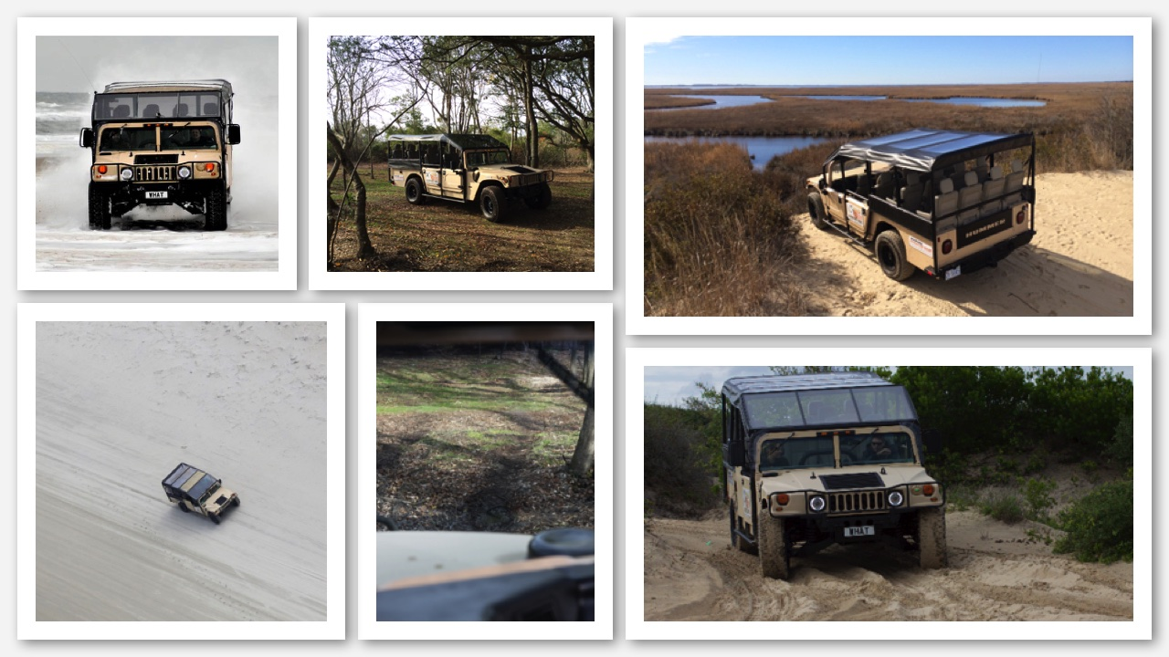 Hummer Tours to see Wild Horses
