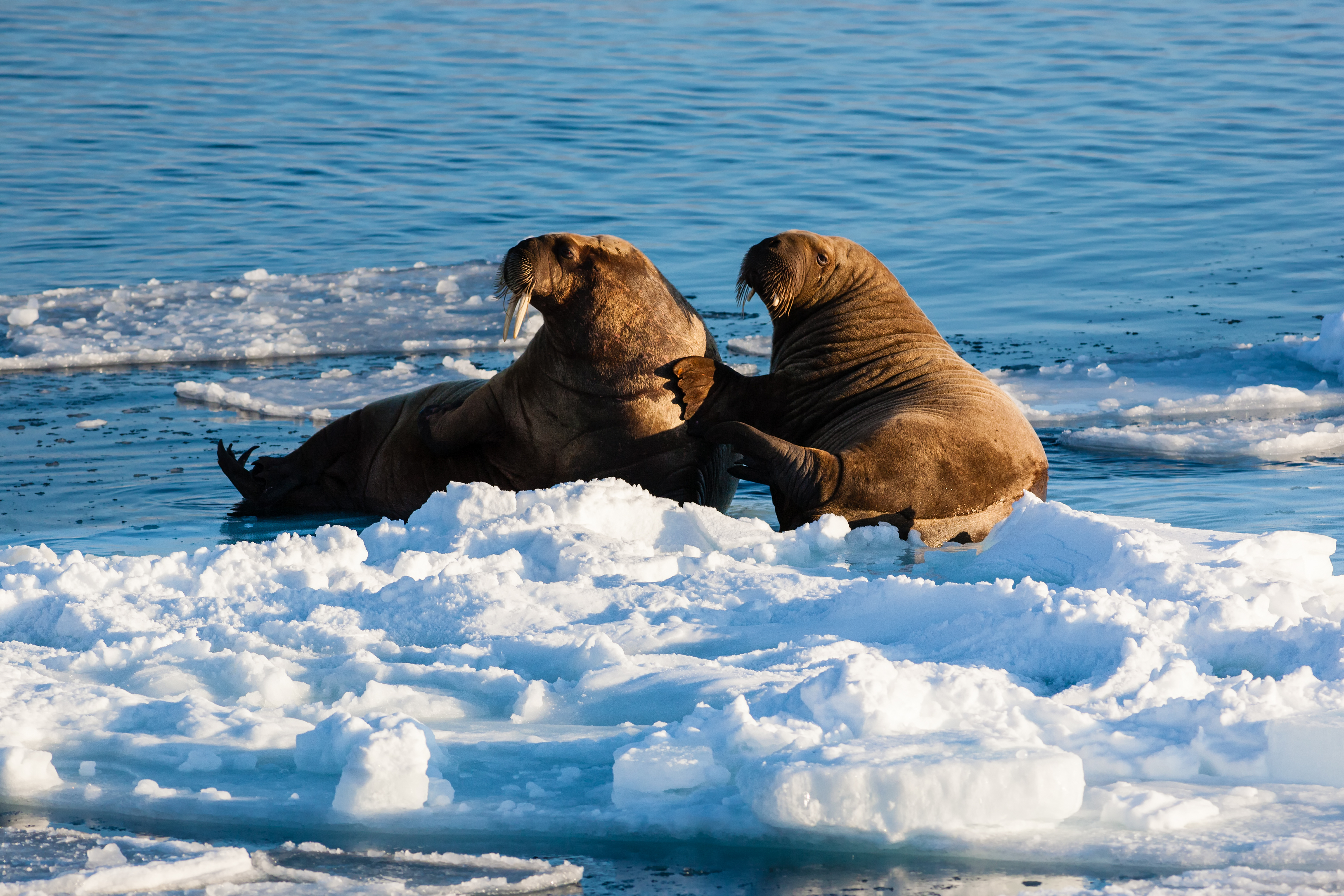 Wildlife expedition in arctic norwegian This offer excludes passport