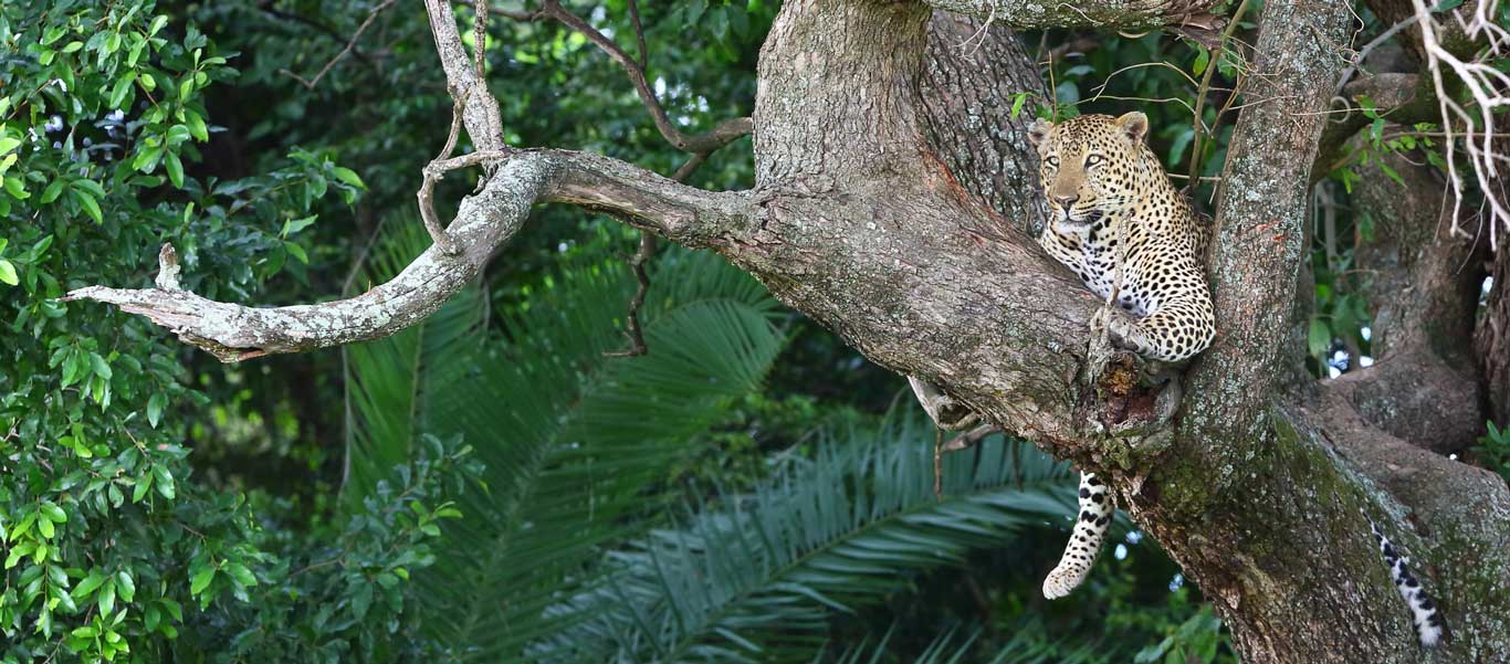Wildlife expedition in panama and nicaragua , Seek advice from the