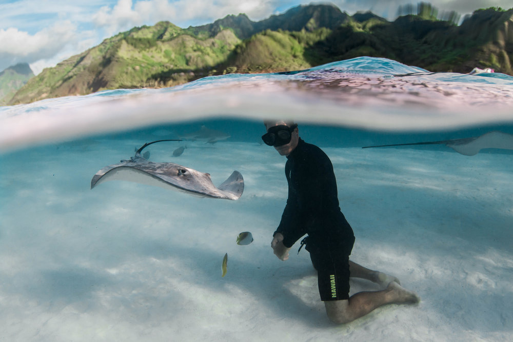 Wildlife expeditions — moorea moana tours spinner dolphins