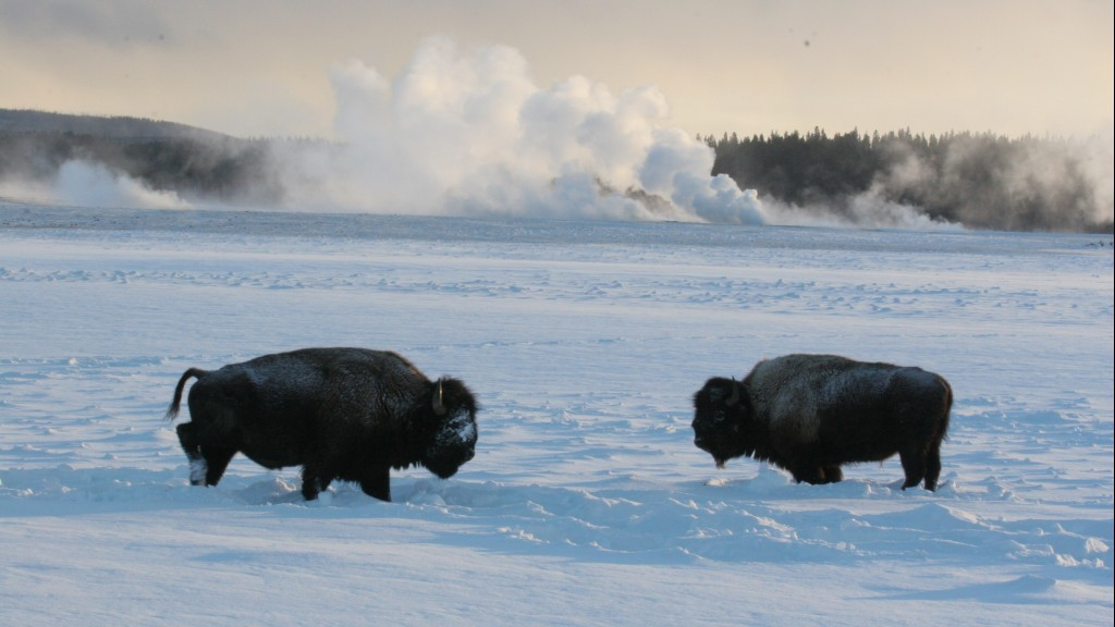 Winter wildlife expedition yellowstone package include tax or utility fee