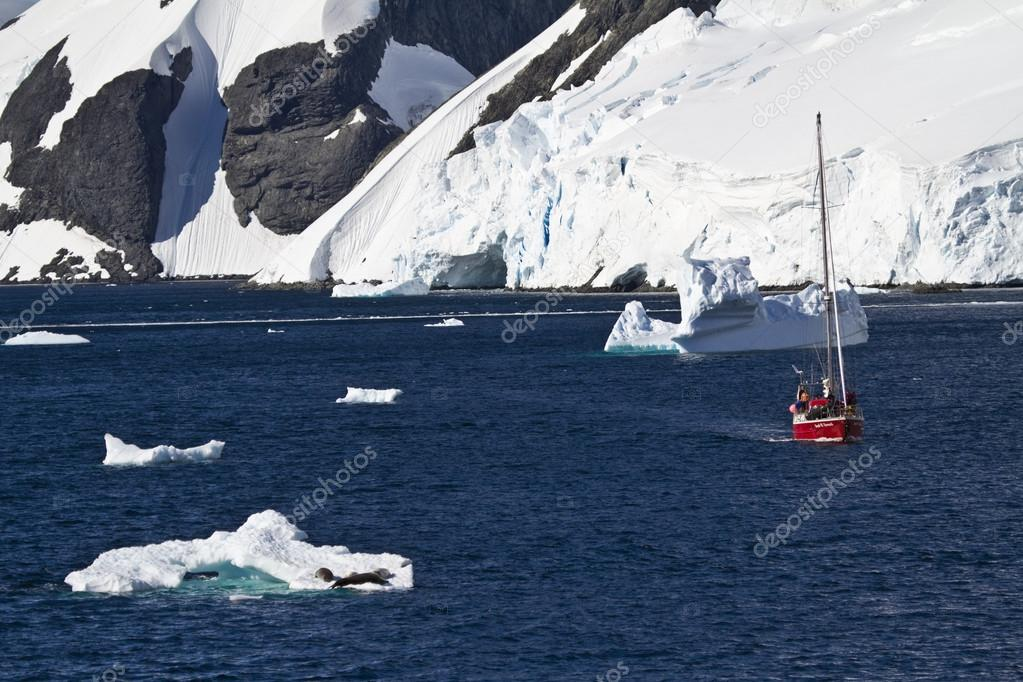 Antarctica wildlife expedition South Usa may be the