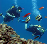 Belize Diving Snorkeling Tour