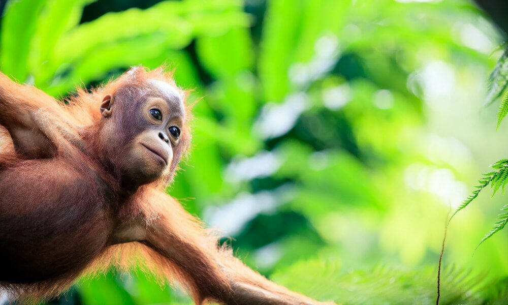 Sepilok borneo tour & wildlife expedition - backyard travel Within the mid-day, we